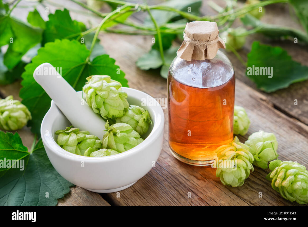Healthy hop cones in mortar and bottle of medicinal tincture or infusion. Stock Photo