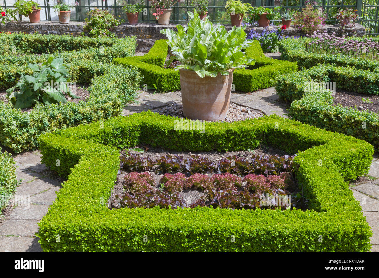 Growing vegetables and herbs in shaped trimmed hedge plots, summer english garden . - Stock Image