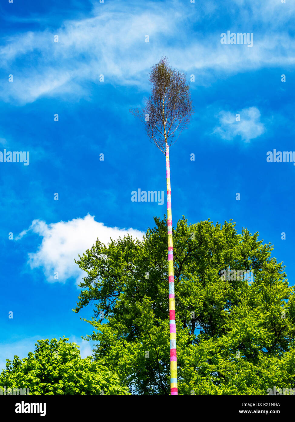 Erected maypole, Maibaum in June, Herresbach Germany - Stock Image