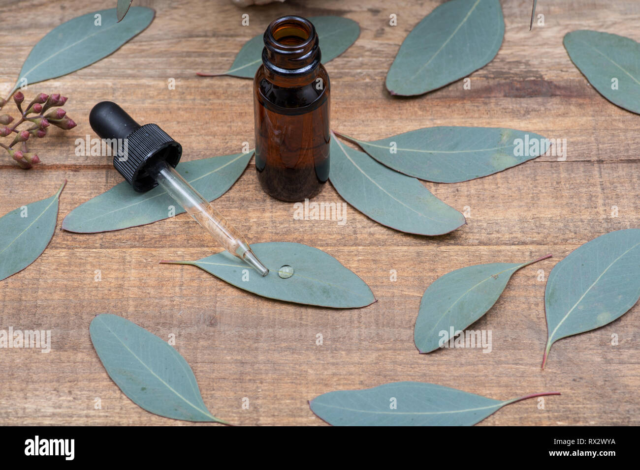 Eucalyptus Essential oil in Amber Round Glass Bottle with Glass Dropper and Fresh Eucalyptus leaves on wooden background. Phytotherapy. - Stock Image