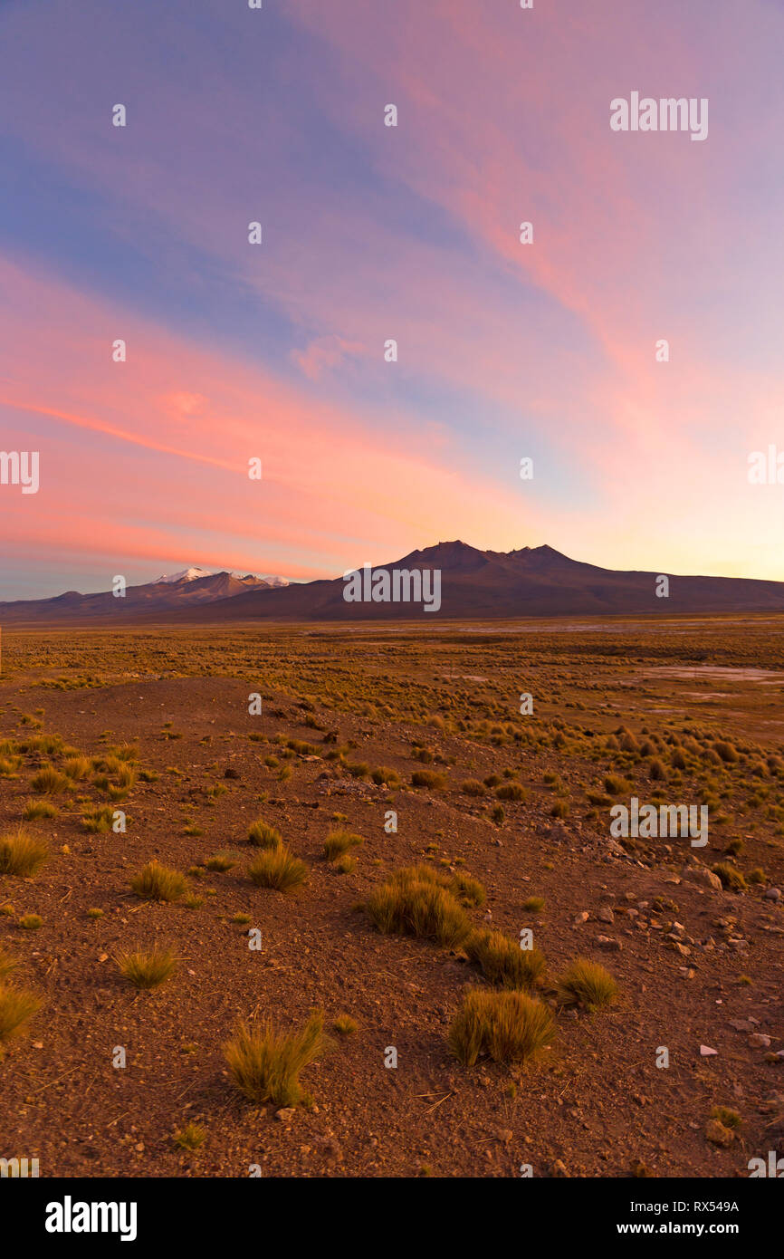 Sunset in Andes. Parinacota volcano. High Andean landscape in the Andes. High Andean tundra landscape in the mountains of the Andes. - Stock Image