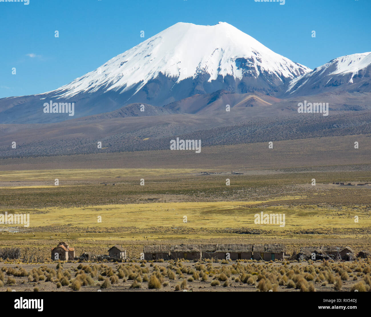 Parinacota volcano. High Andean landscape in the Andes. High Andean tundra landscape in the mountains of the Andes. The weather Andean Highlands Puna  - Stock Image