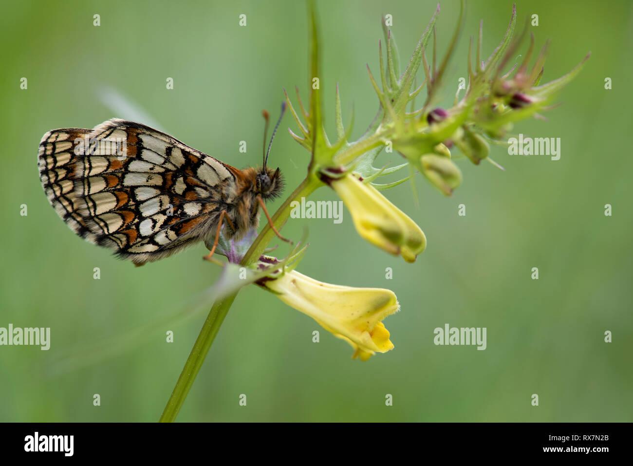 Melam Stock Photos & Melam Stock Images - Alamy