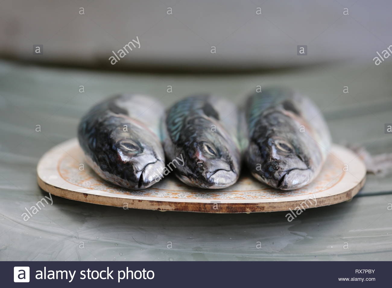 Mackerel at the pier in Dingle, County Kerry as the fishing industry worries about the outcome of Brexit. - Stock Image