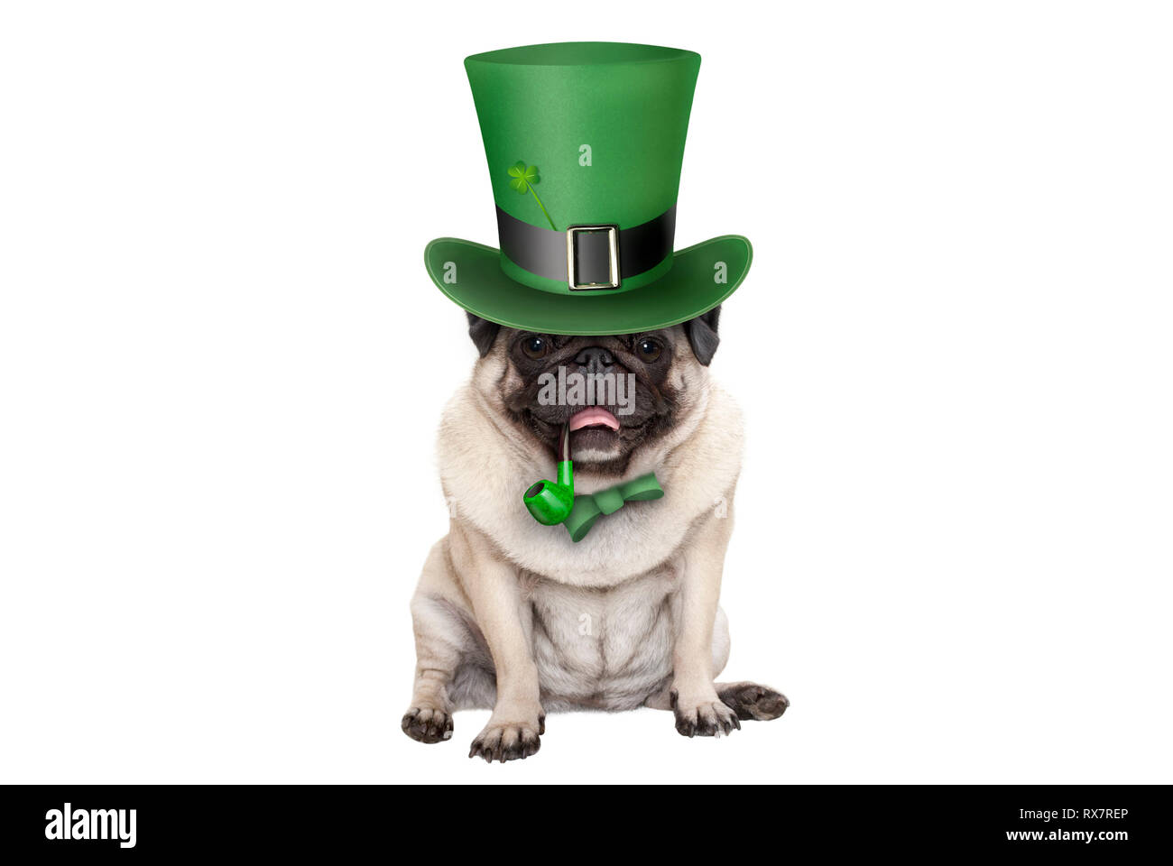 cute smiling st patricks day pug puppy dog sitting down with green top hat and pipe, isolated on white background Stock Photo