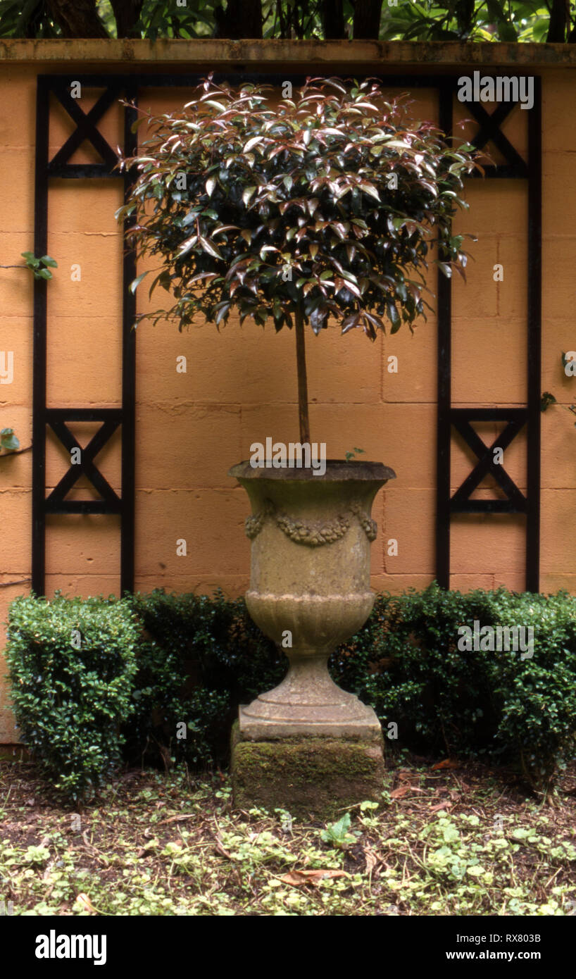 STONE GARDEN URN POT IN FRONT OF WALL SURROUNDED BY LOW HEDGE. NEW SOUTH WALES, AUSTRALIA - Stock Image