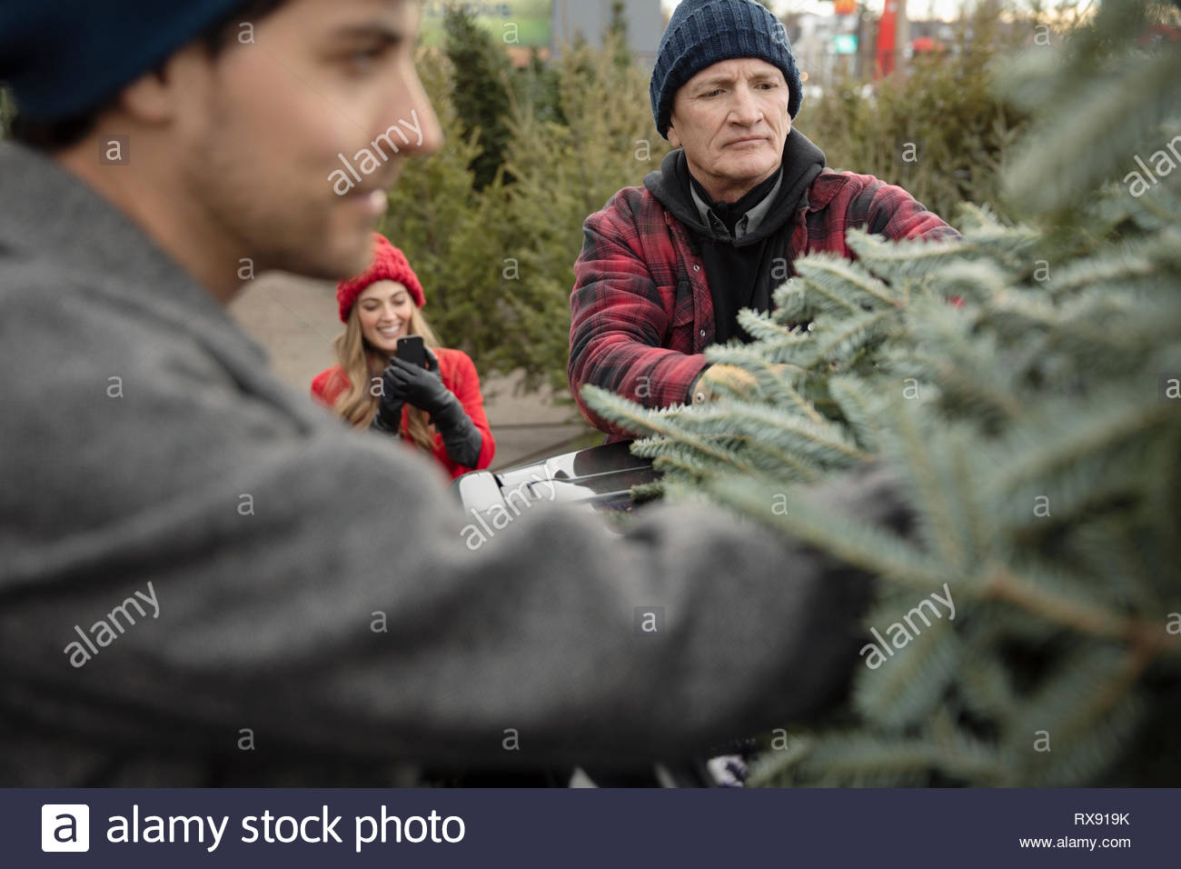 Worker helping man tie down christmas tree onto car at christmas market - Stock Image