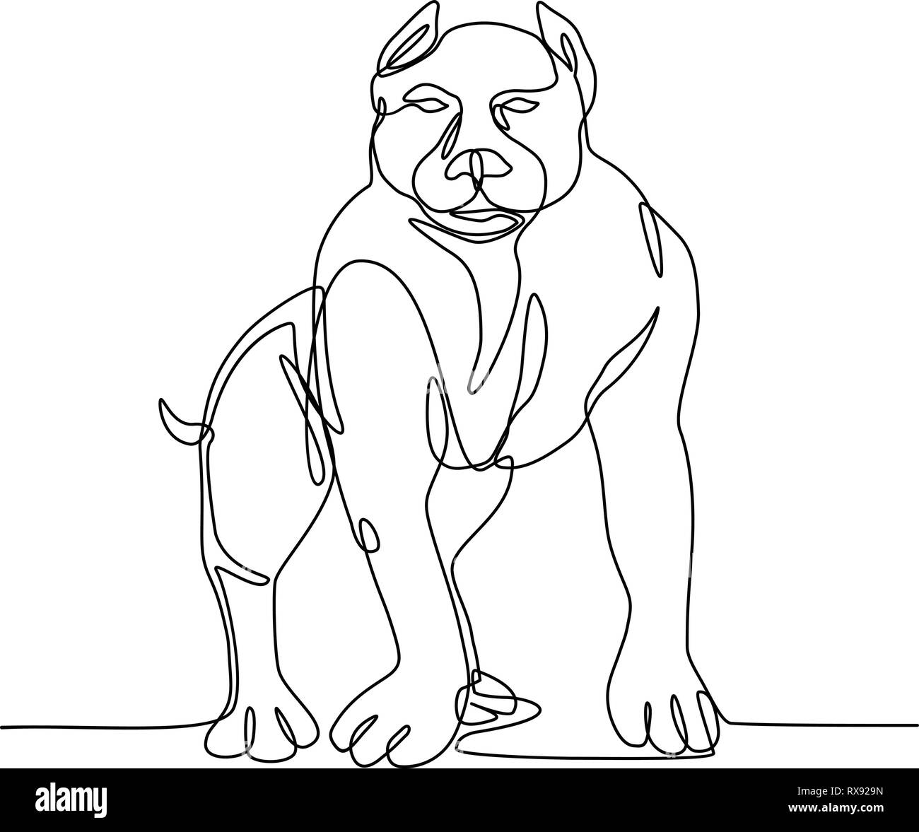 Continuous line illustration of an  American Bully, pit bull, a type of dog descended from bulldogs and terriers  done in black and white monoline sty - Stock Image