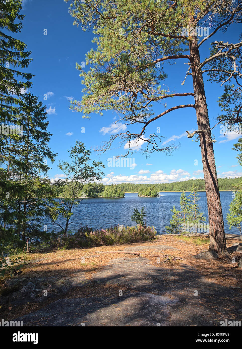 Idyllic Finnish summer lake scene at Teijo hiking trail in Salo, Finland. Big tree and the Matildajarvi lake on the background. - Stock Image