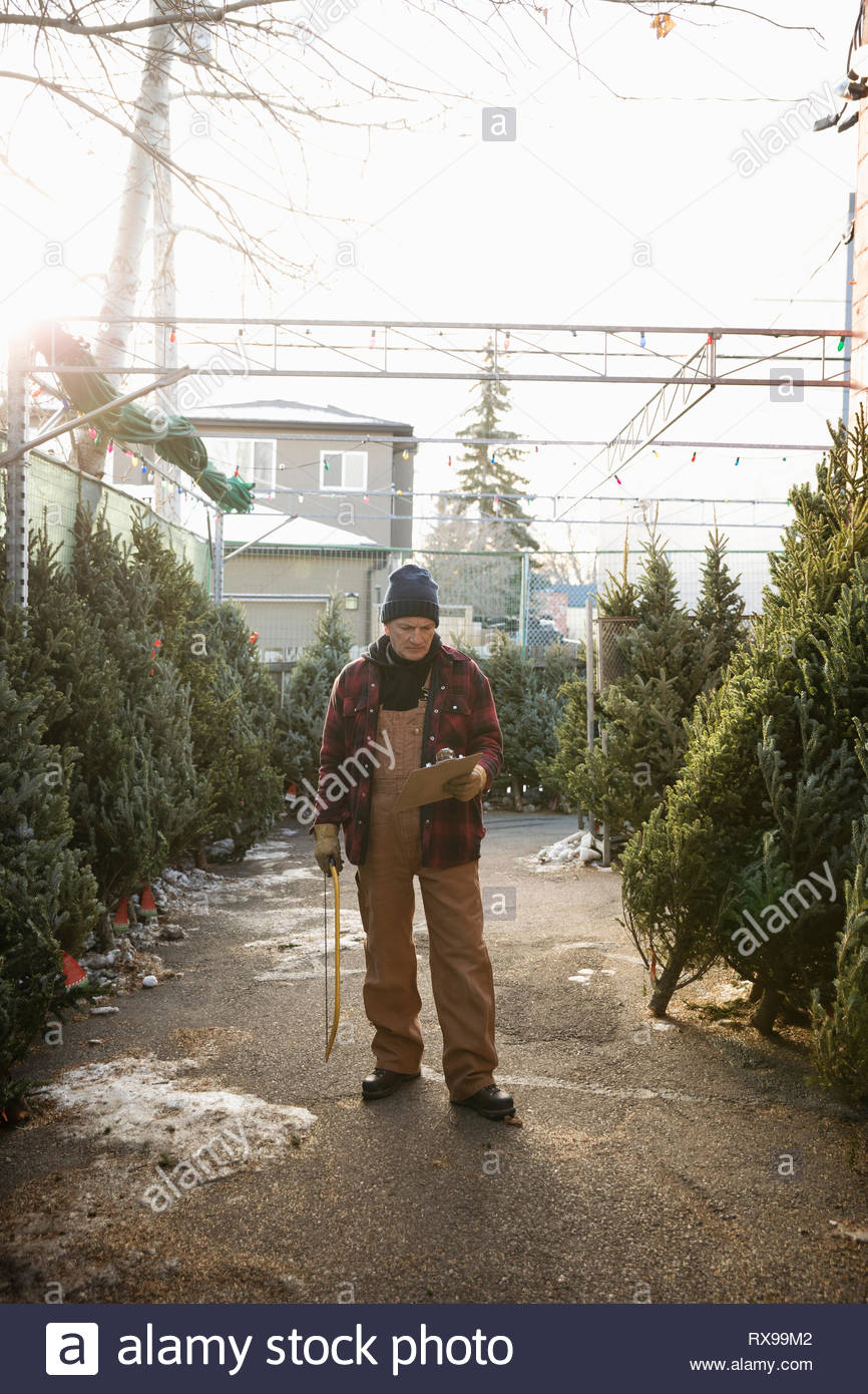Worker with clipboard and saw working at christmas tree market - Stock Image