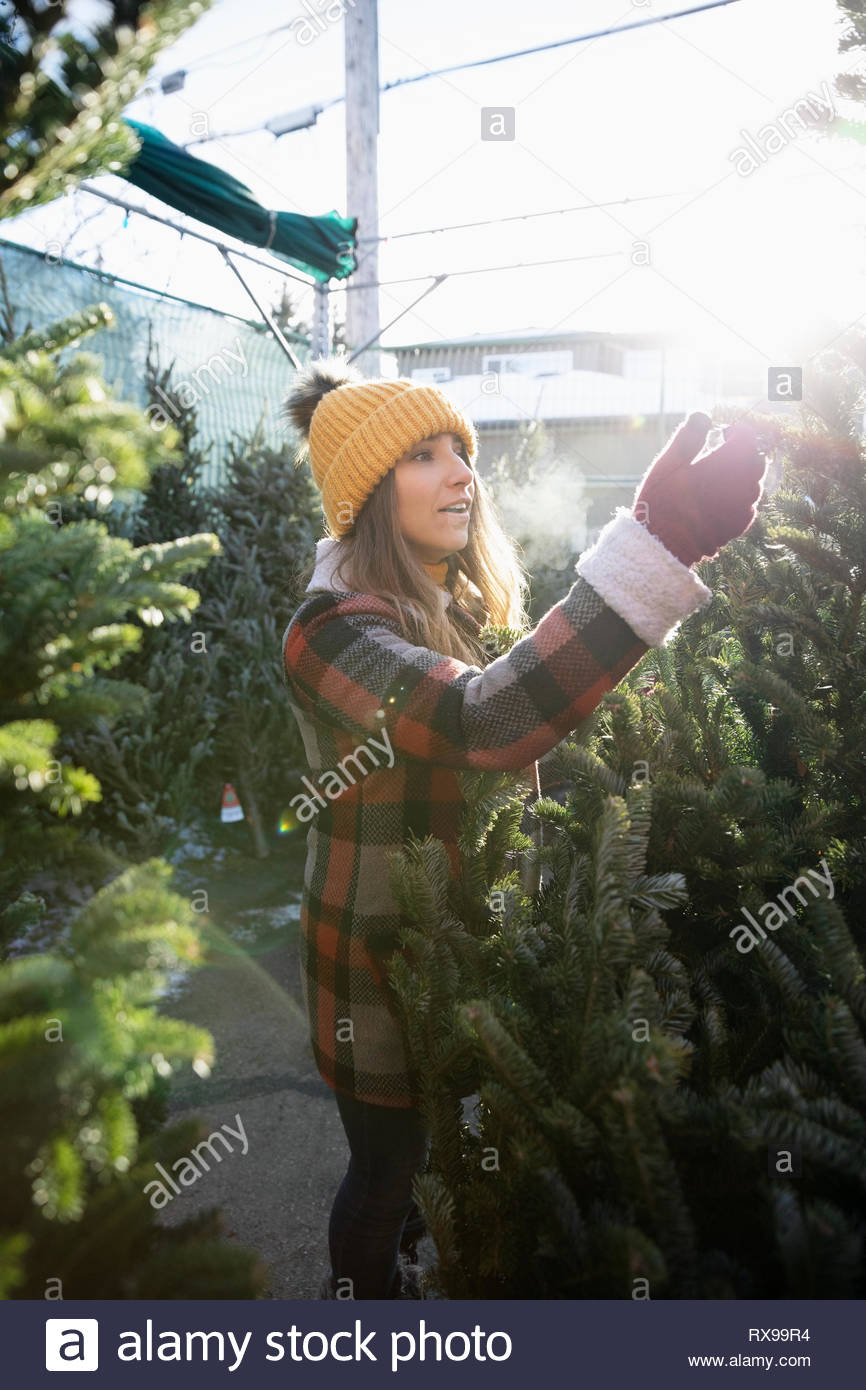 Woman shopping for christmas tree at christmas market - Stock Image