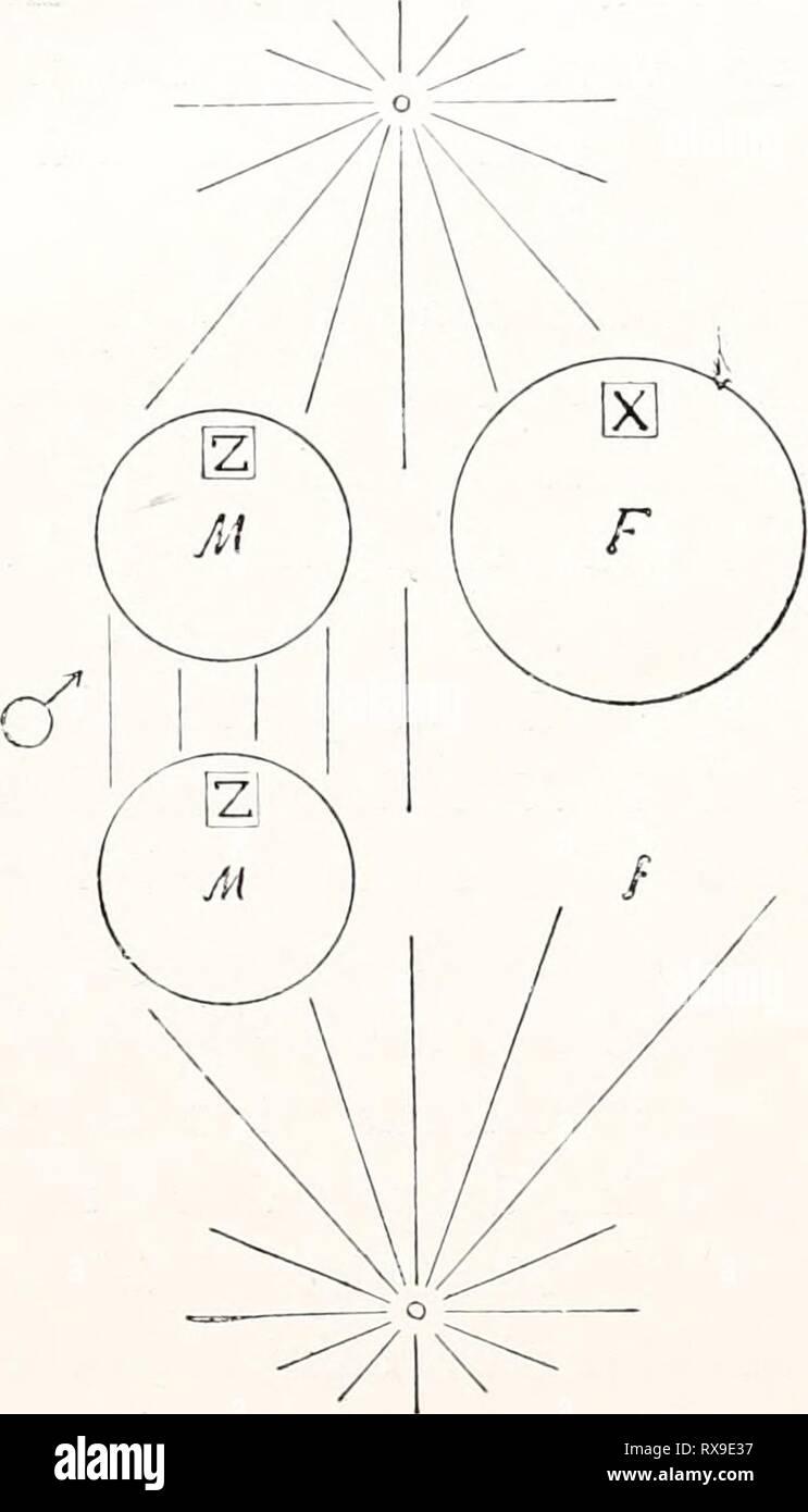 Einführung In Die Vererbungswissenschaft; In Einführung In Die  Vererbungswissenschaft; In Zweiundzwanzig Vorlesungen Für Studierende