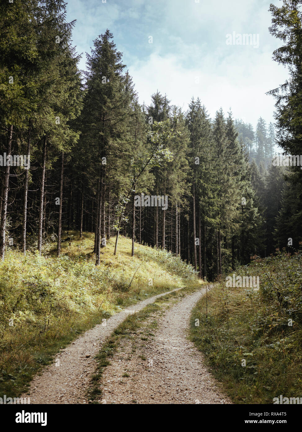 Empty hiking trail amidst trees in forest - Stock Image
