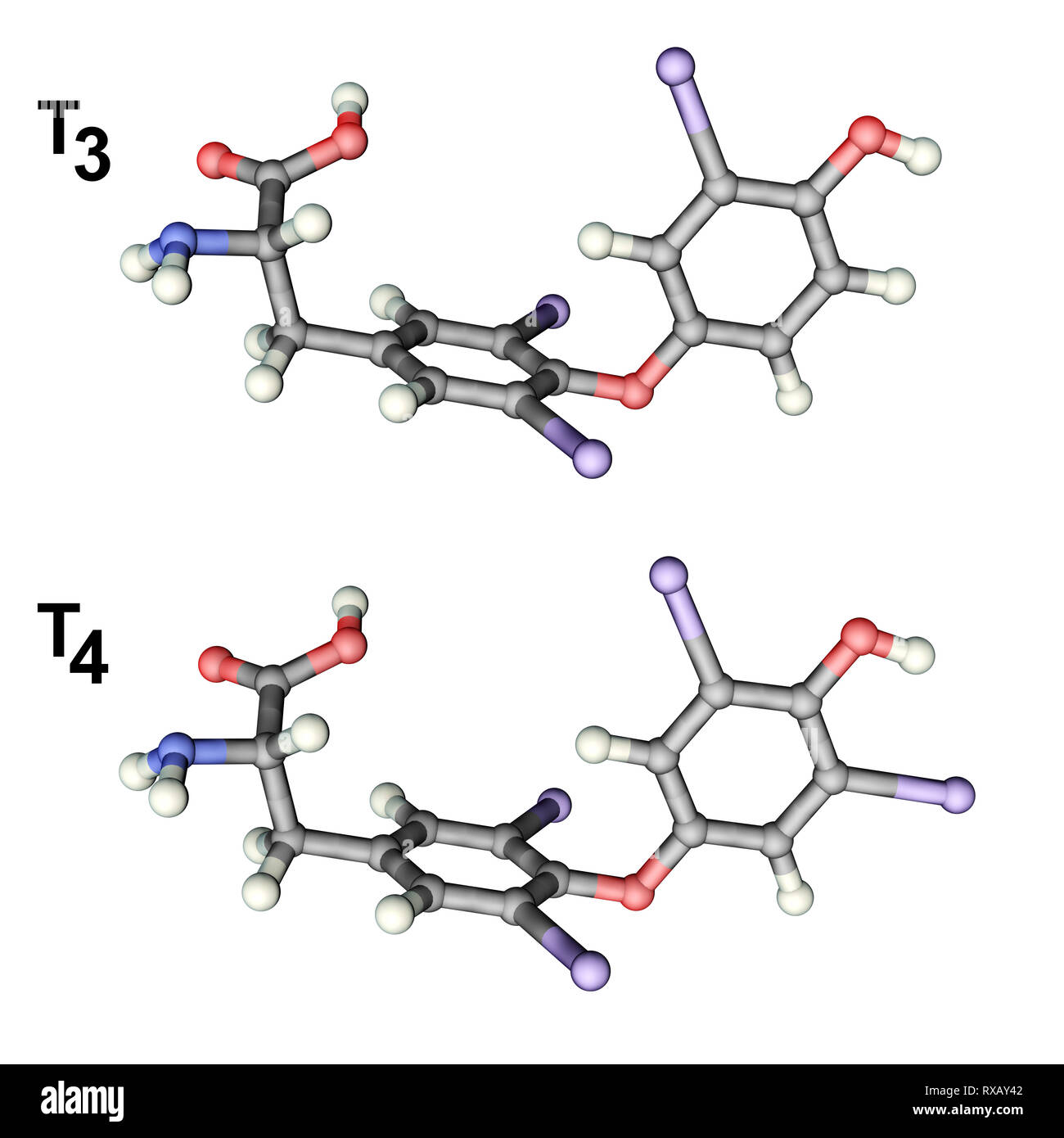 Triiodothyronine and thyroxine hormone, molecular models Stock Photo