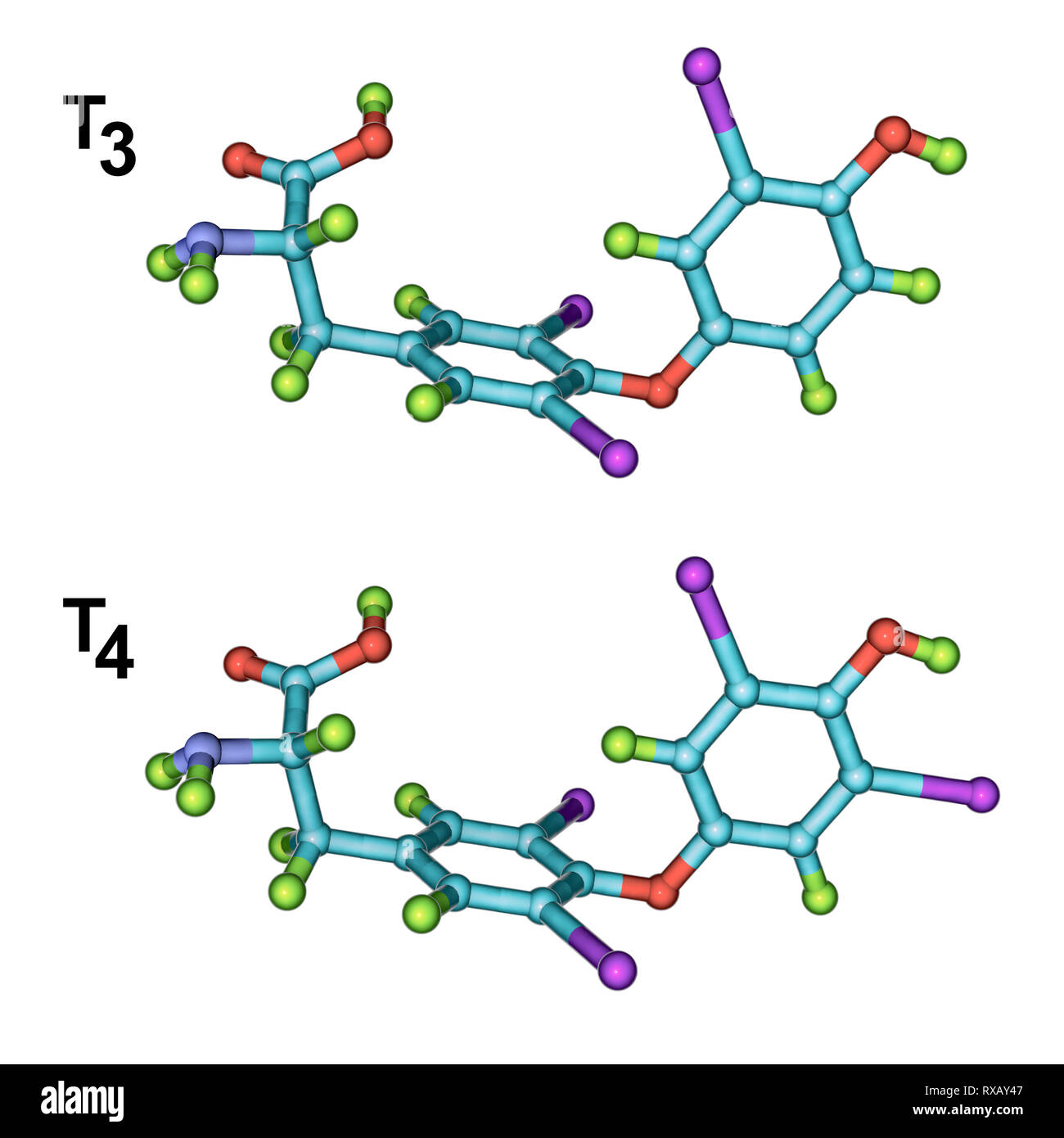 Triiodothyronine And Thyroxine Hormone Molecular Models Stock