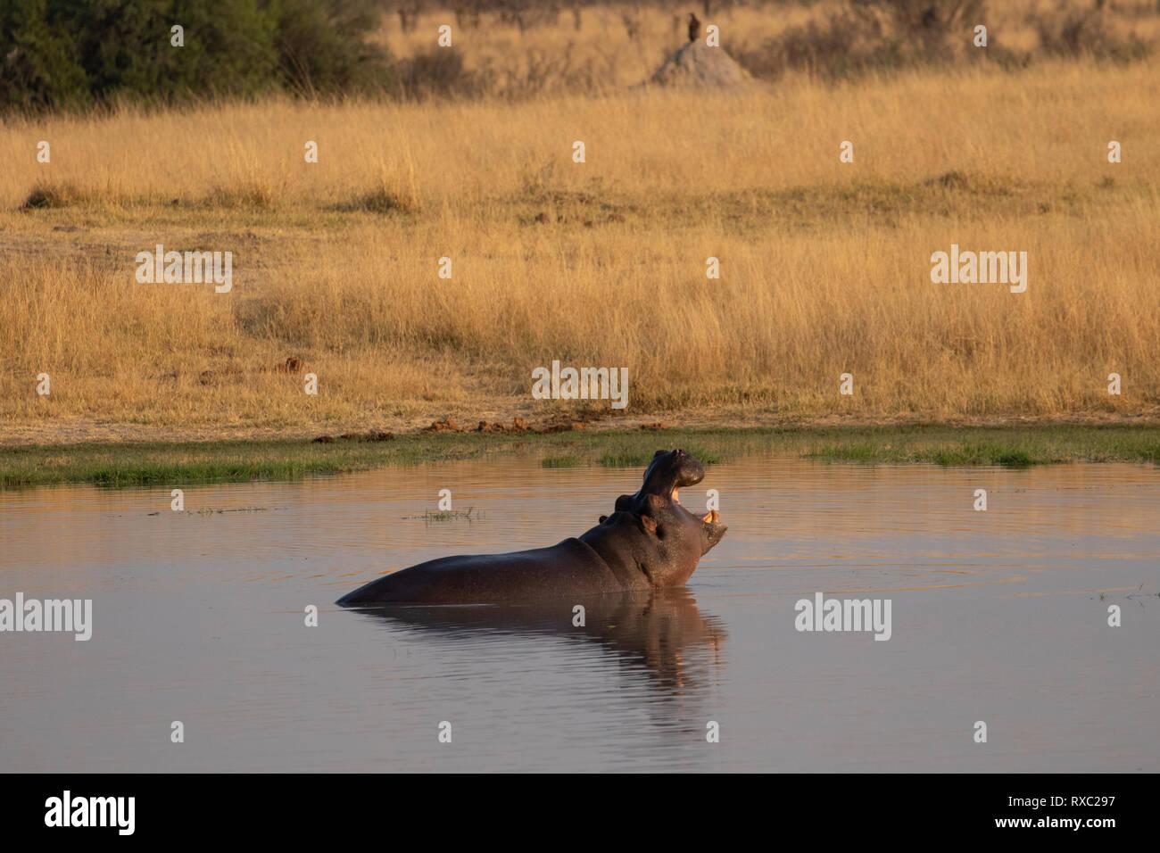Hwange National Park, Zimbabwe Stock Photo
