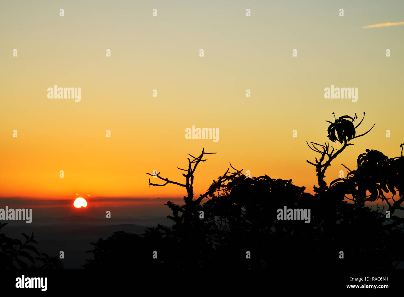 Trees silhouettes at sunrise in Brazil - Stock Image