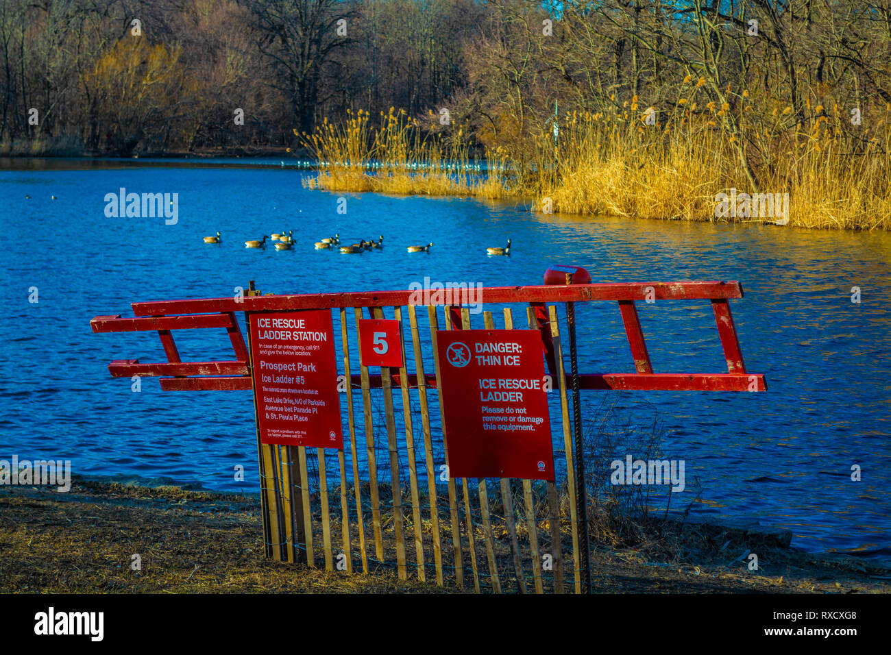 Danger thin ice emergency rescue ladder near the Prospect Park pond, Brooklyn New York, Spring 2019 - Stock Image