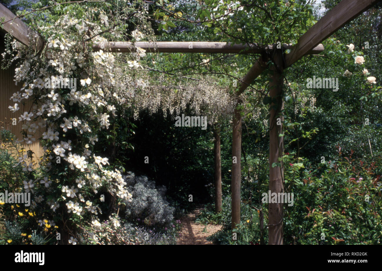 WHITE CLEMATIS AND WISTERIA GROWING OVER WOODEN PERGOLA IN A COTTAGE GARDEN, NEW SOUTH WALES, AUSTRALIA. - Stock Image