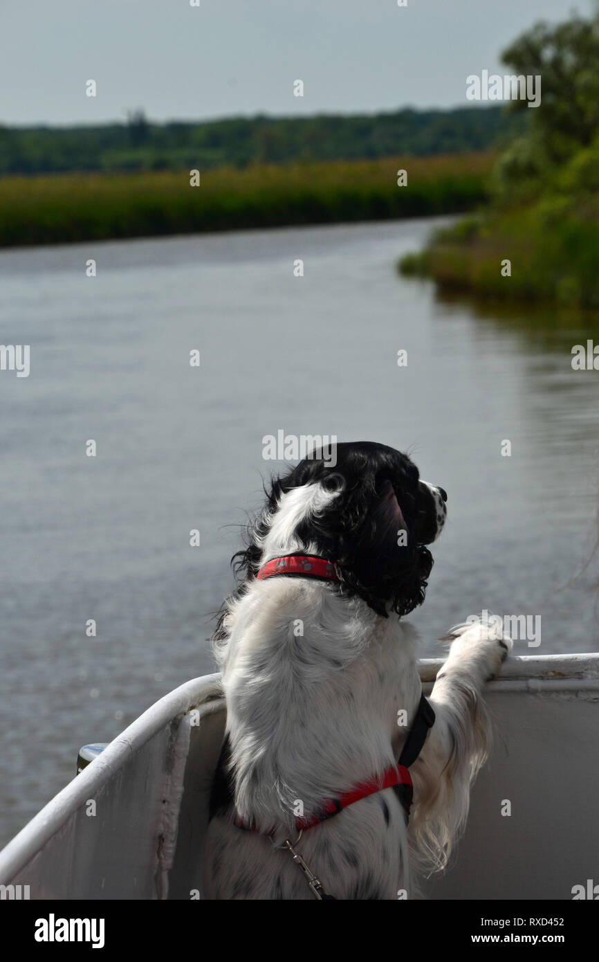 Dog cruising on the Waveney Princess travelling from Oulton Broad through the waterways, Suffolk, UK - Stock Image