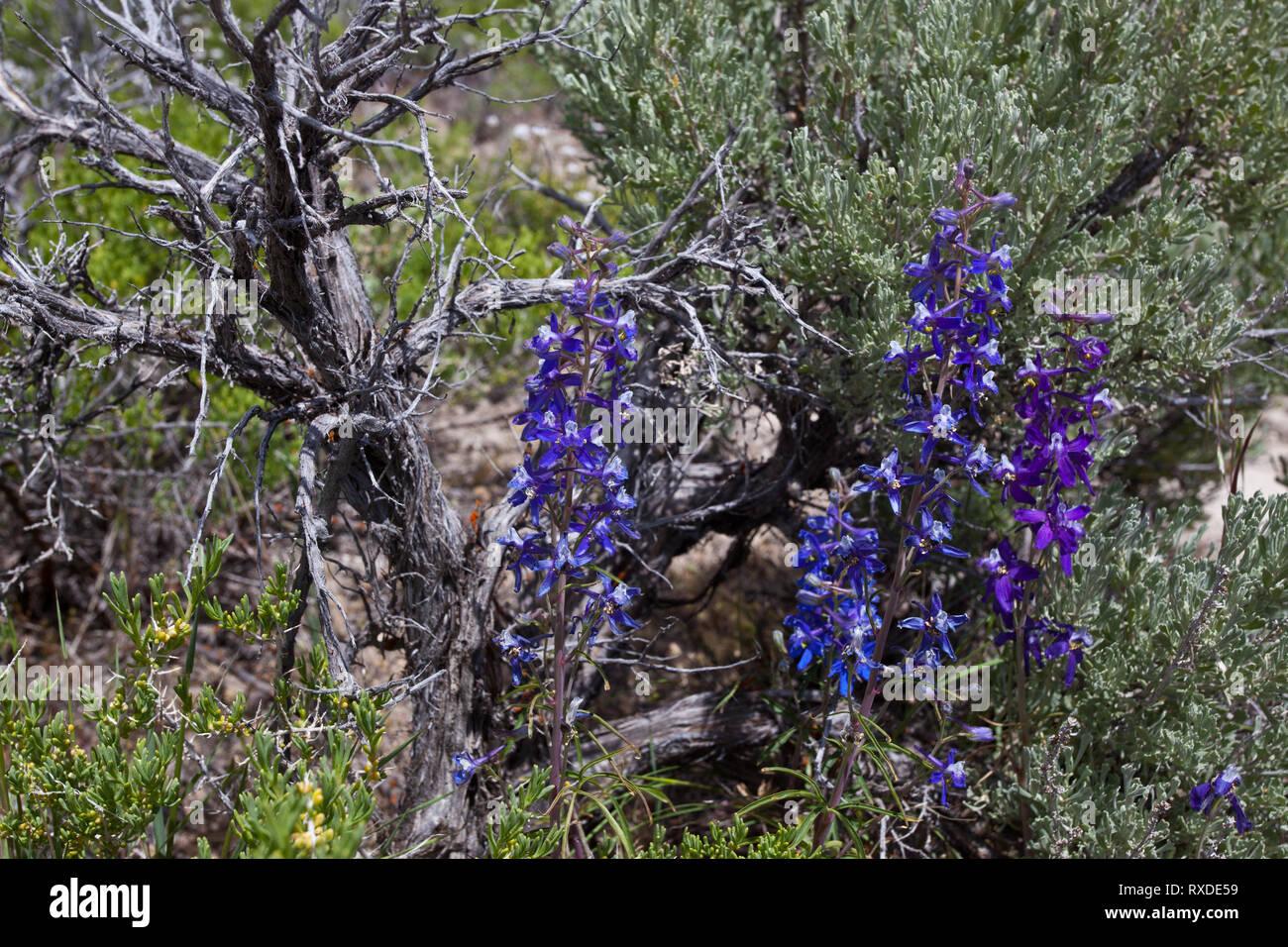 , Elko County, Nevada, USA - Stock Image