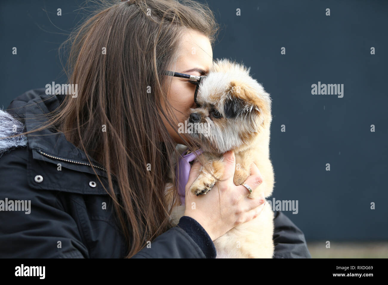 Birmingham, UK. 9th March, 2019. Dogs arrive with their owners on day three of Crufts, the world's largest dog show, at the NEC Birmingham. Minnie the Shipom is held by her owner Lauren. Peter Lopeman/Alamy Live News - Stock Image