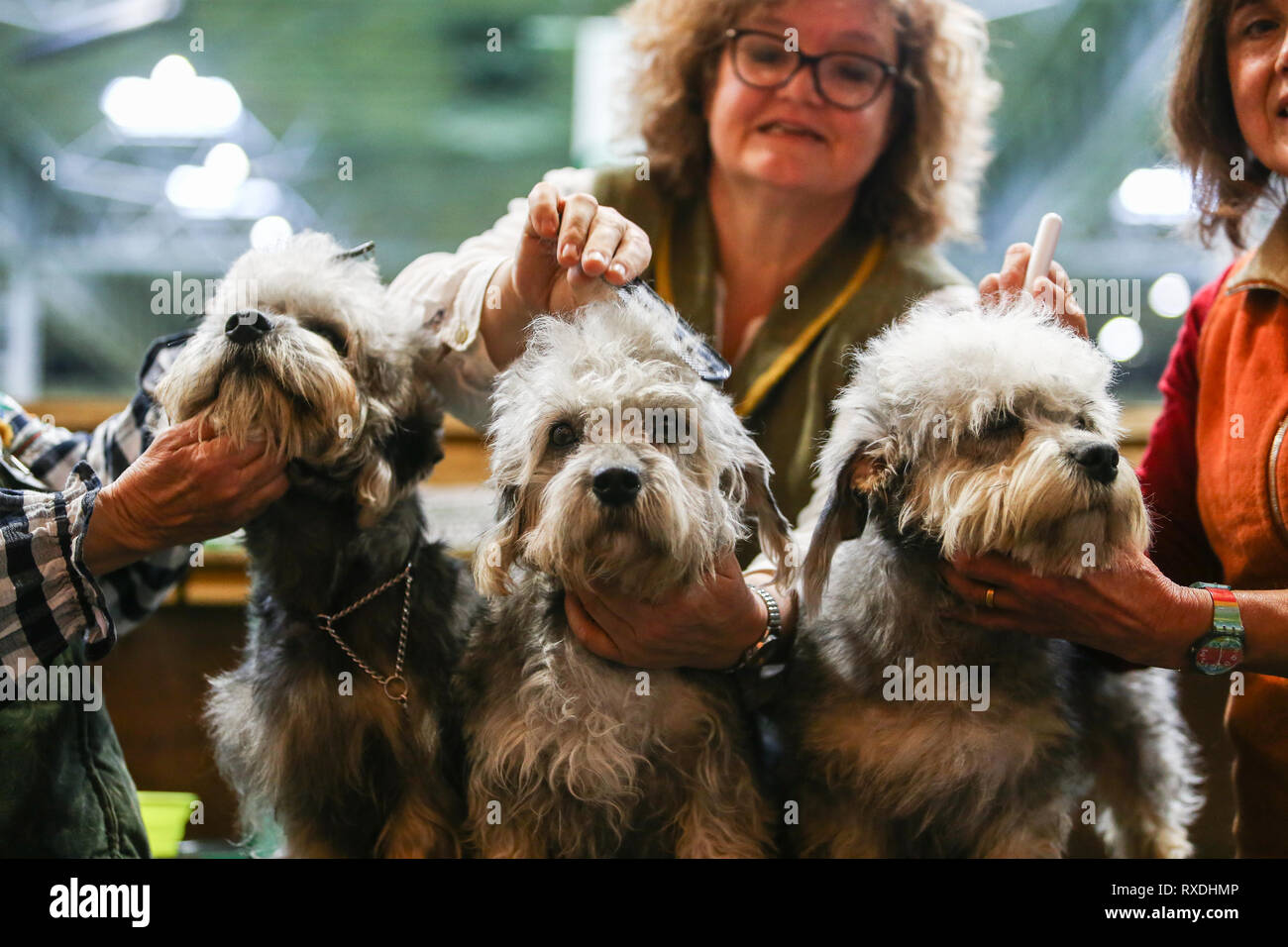 Birmingham, UK. 9th March, 2019. Three terriers receive a last minute spruce before the show. Credit: Peter Lopeman/Alamy Live News - Stock Image