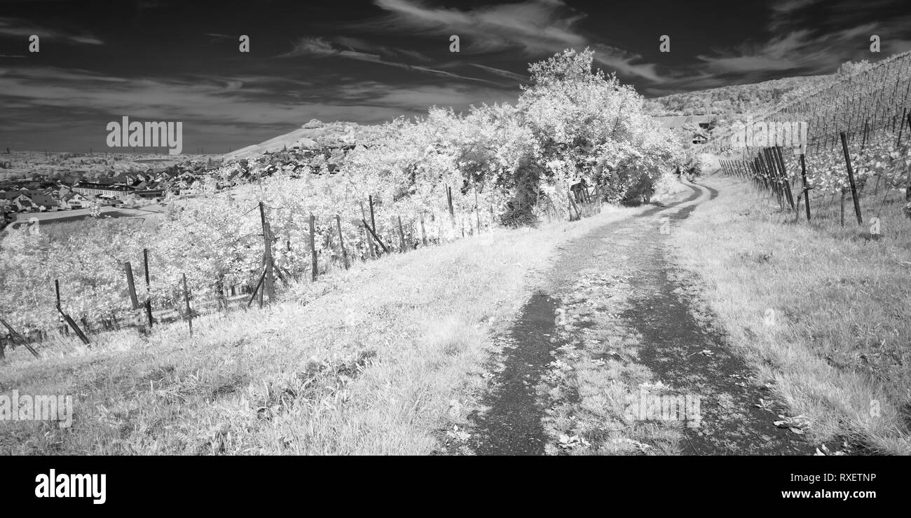 German vineyard in black and white infrared photography stock photo