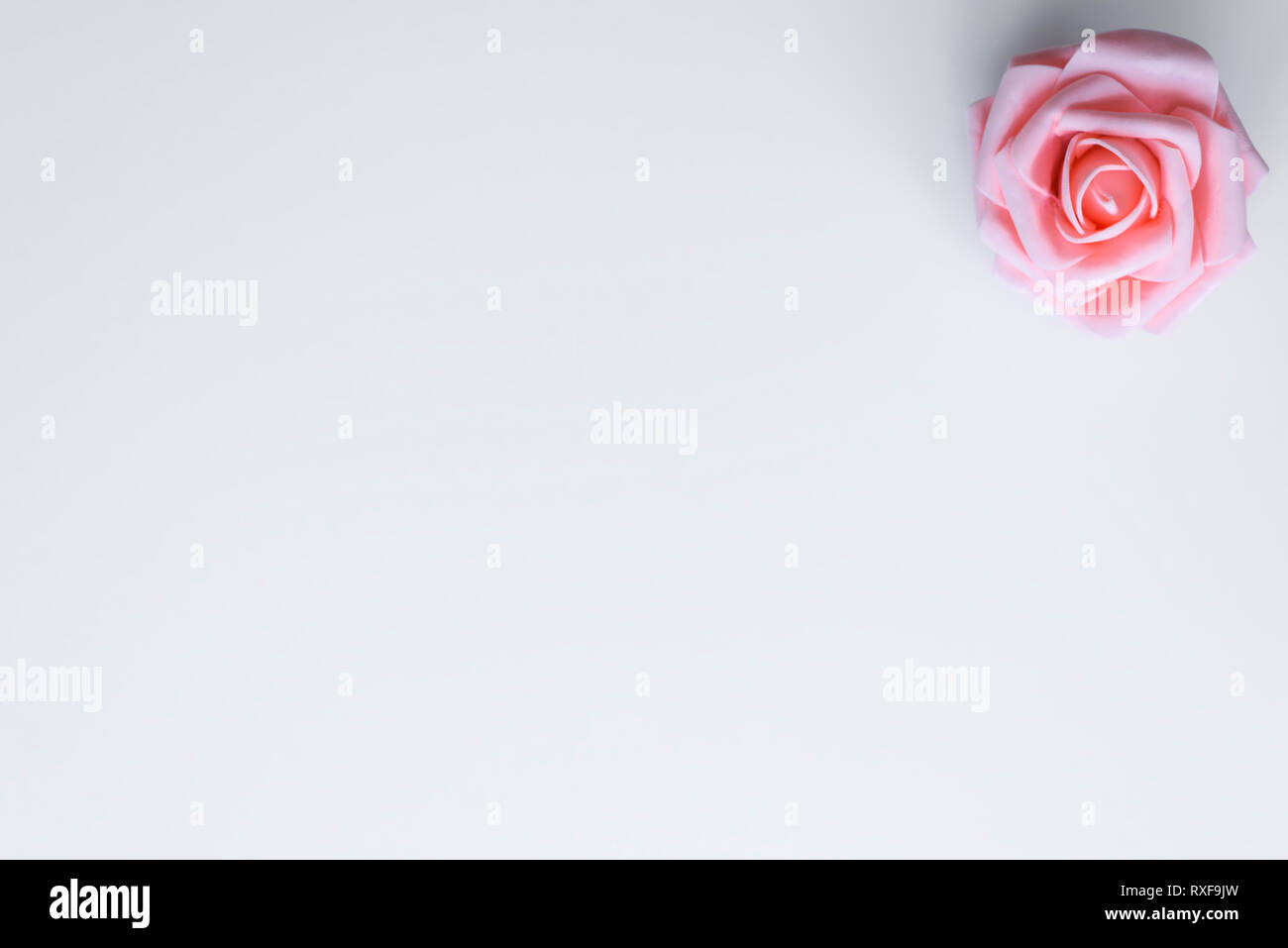 Single rose flower in pink color, lies on white background with copy space for Happy Valentines Day or Mothers wishes. Love concept. - Stock Image
