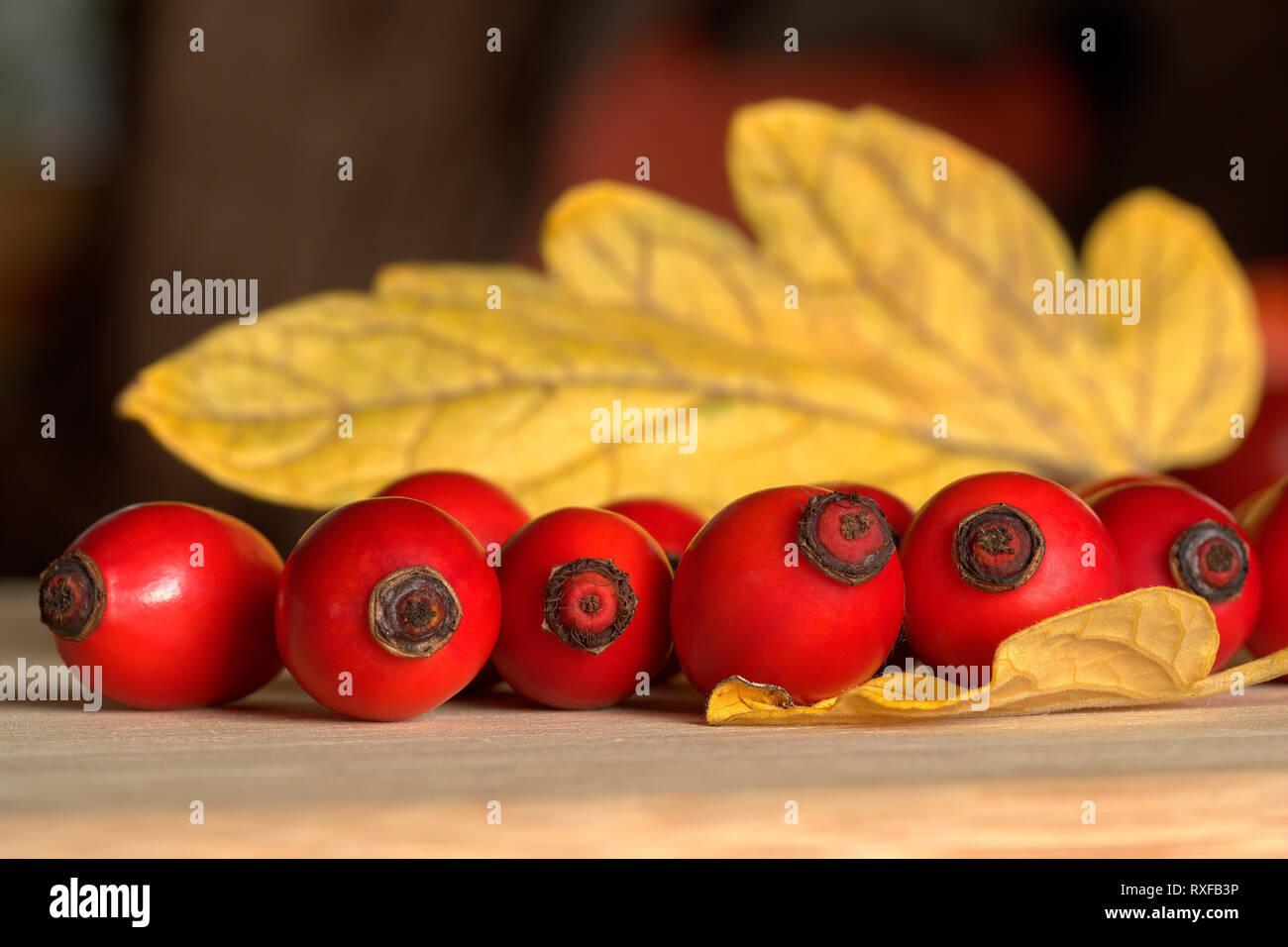 Hagebutten Reihe mit Blatt im Hintergrund - Stock Image