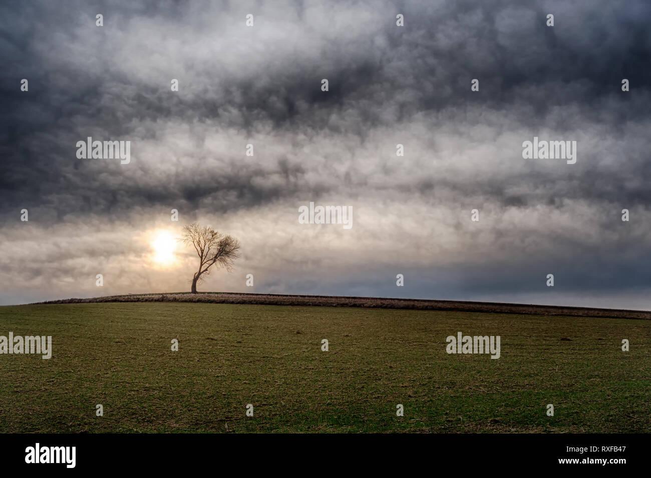 Einzelner Baum auf freiem Feld - Stock Image