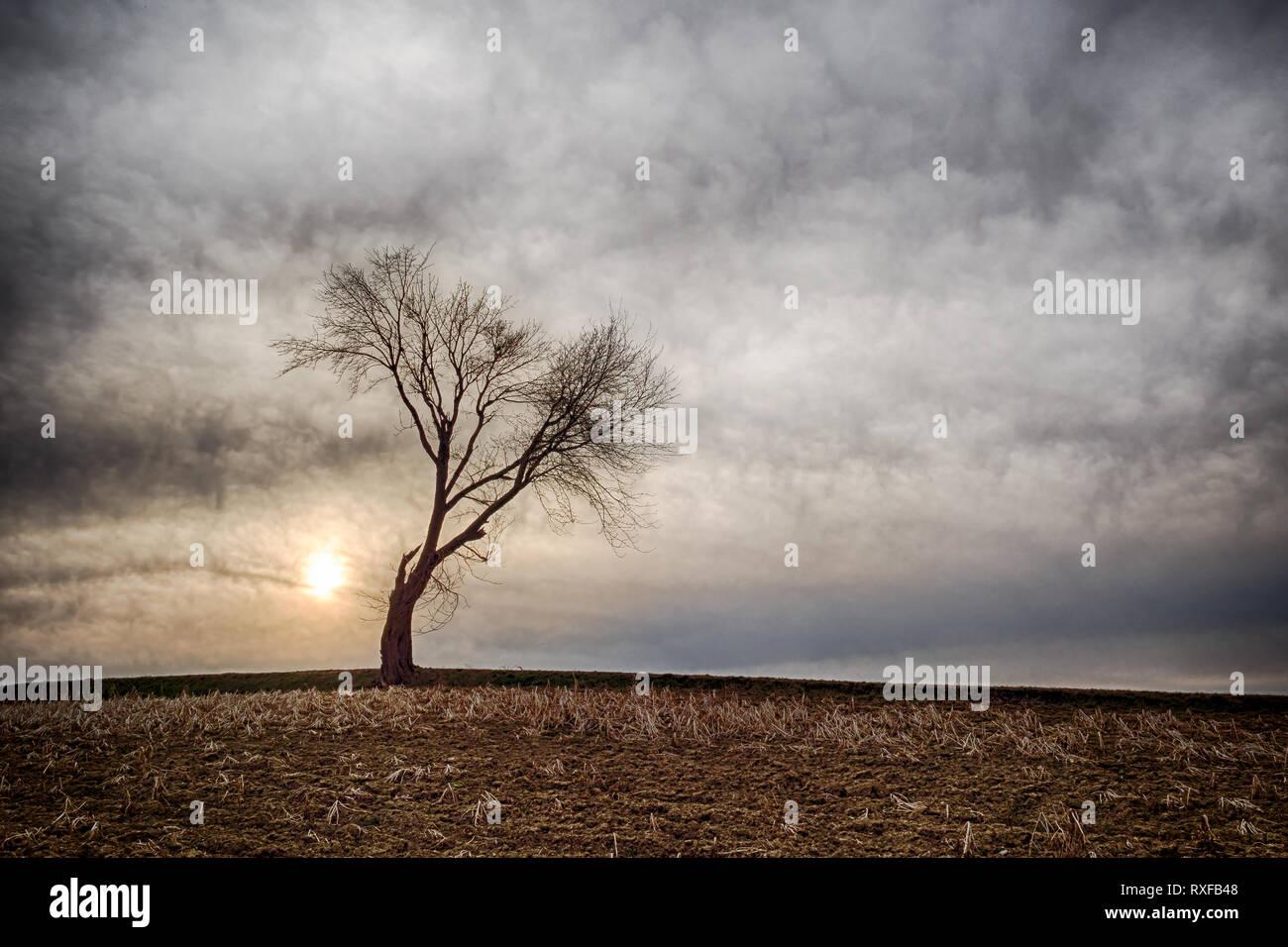 Einzelner Baum auf freiem Feld Stock Photo