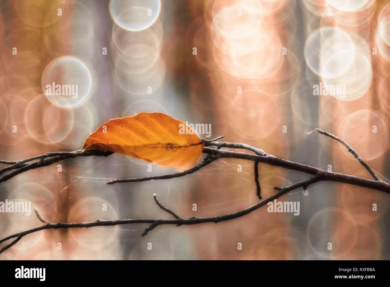 Einzelnes Laub, Blatt an einem Zweig im Sonnenlicht, strukturiertes Altglas Bokeh - Stock Image