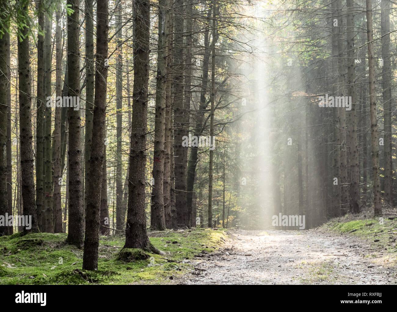Waldweg von Sonnenstrahlen beleuchtet - Stock Image