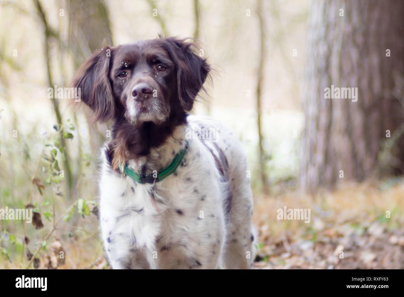 Hunde Portrait - Stock Image