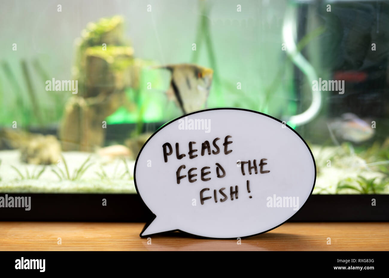 Written reminder to please feed the fish in front of fish tank - Stock Image