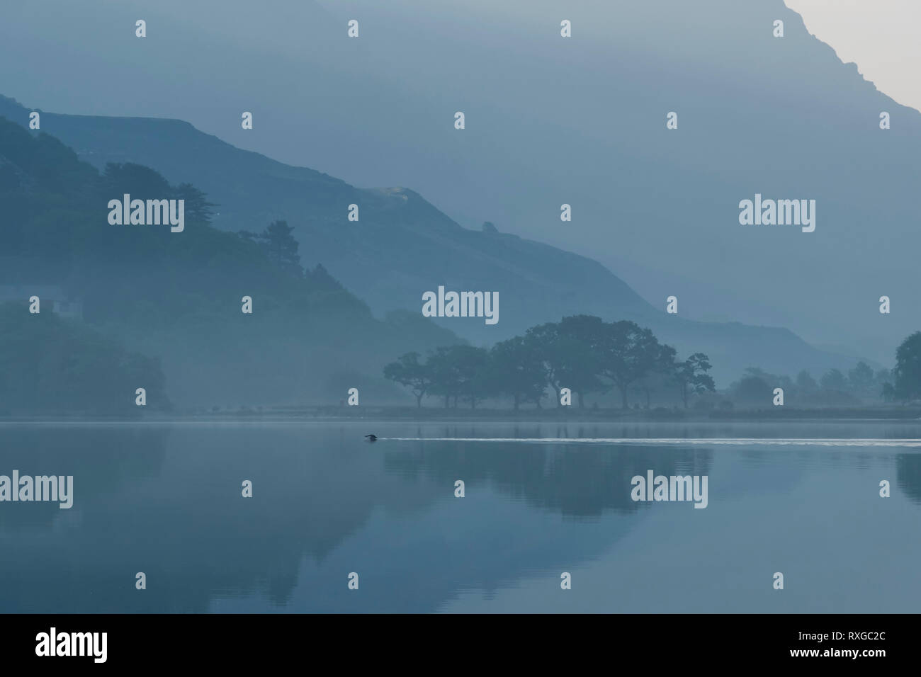 Outdoor Lake Swimmer in Llyn Padarn on a misty morning, Llanberis Pass, Snowdonia National Park, North Wales, UK - Stock Image