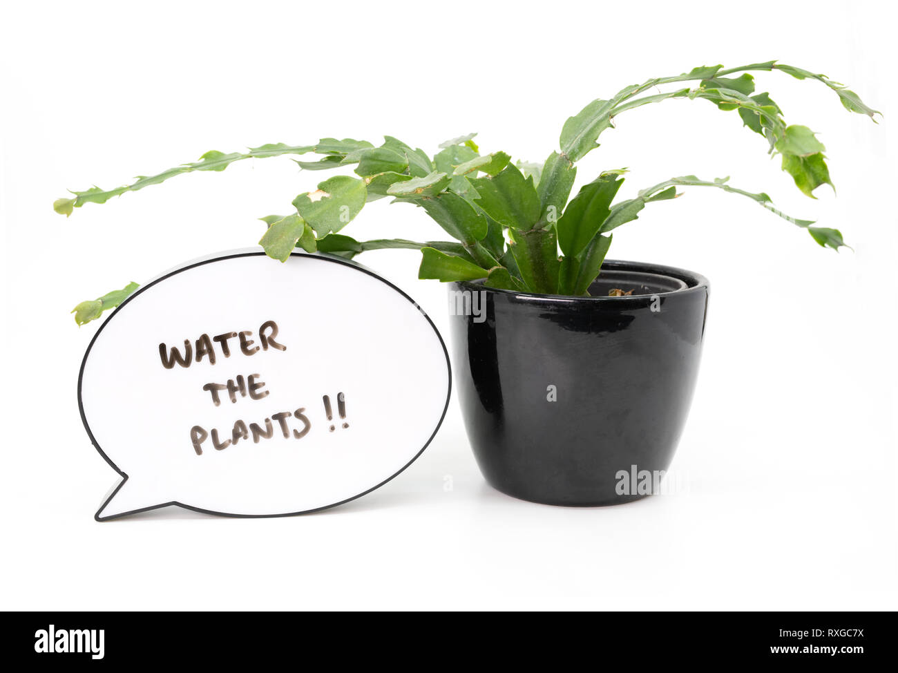 Reminder to water the plants next to a house plant on white background - Stock Image