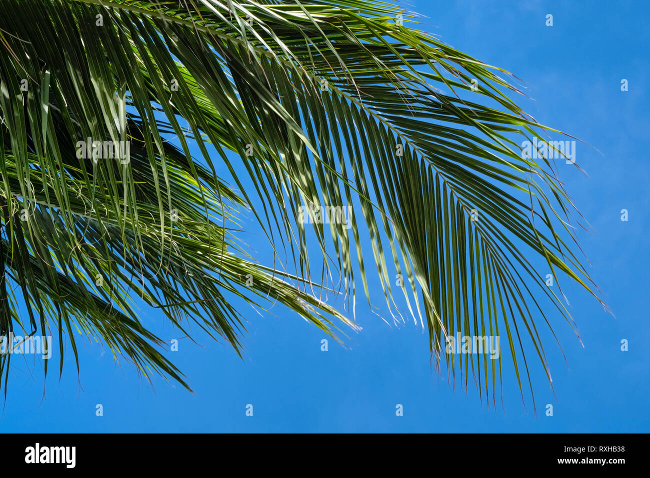 Palm Fronds In The Sky Stock Photo