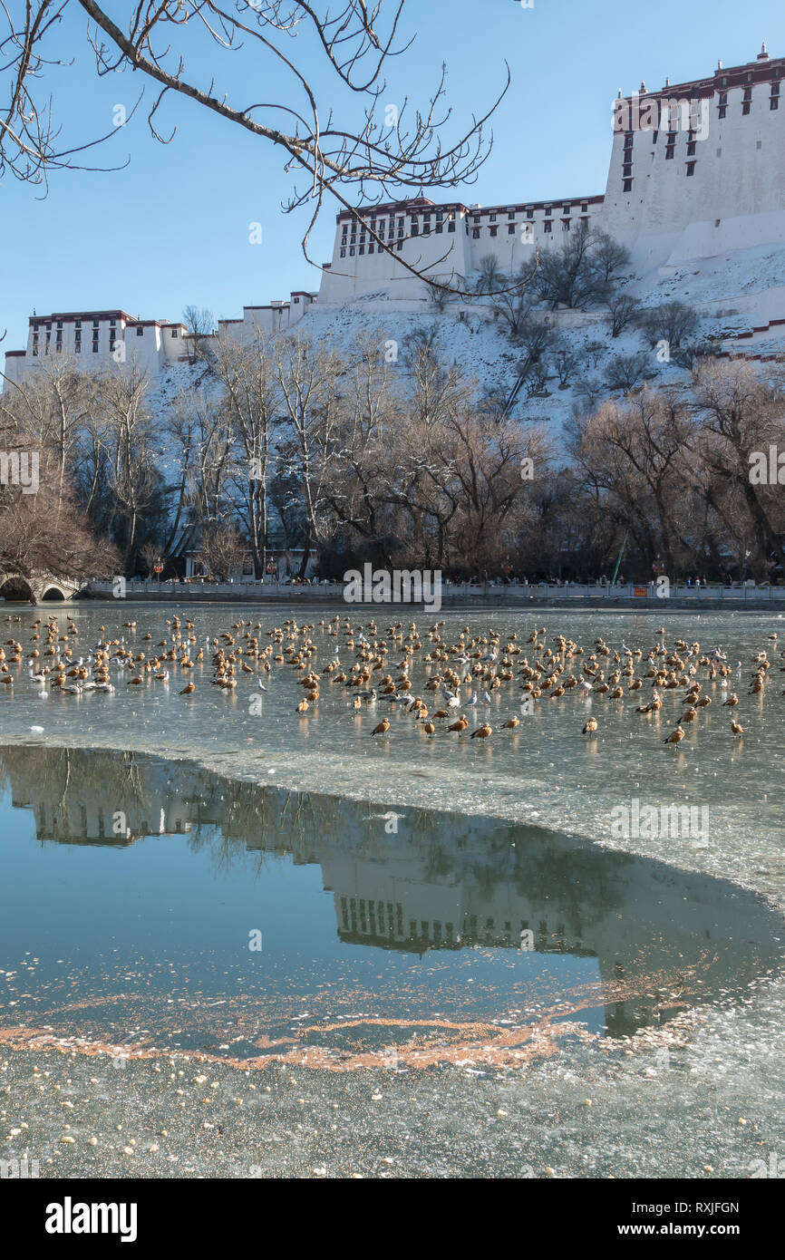 Ducks and geese on a frozen lake with Potala Palace in the background. Lhasa, Tibet, during winter. - Stock Image
