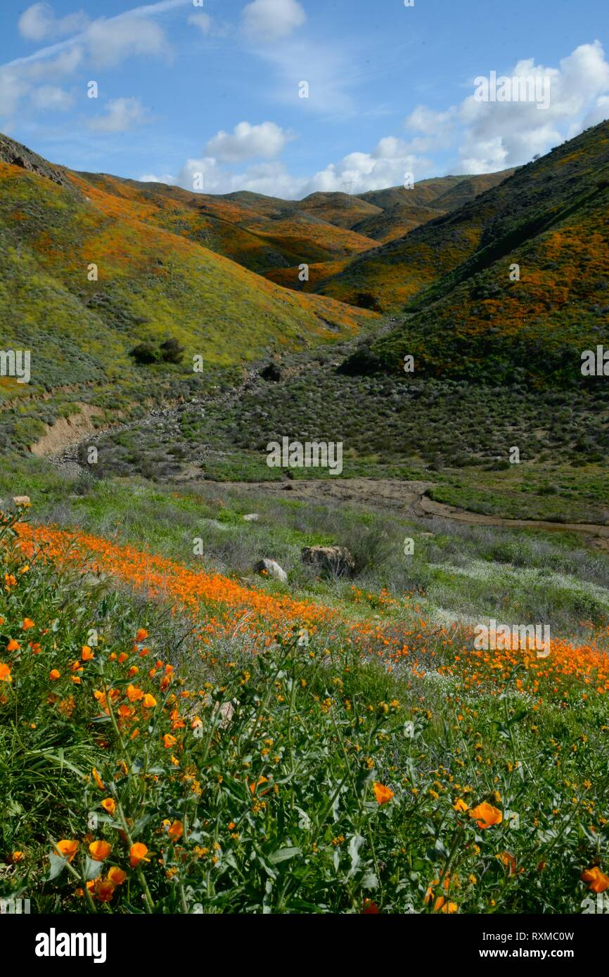Super Bloom 2019. The Walker Canyon Poppy Fields have been shut down by the City of Lake Elsinore due to the overwhelming crowds. Photo taken March 9. - Stock Image