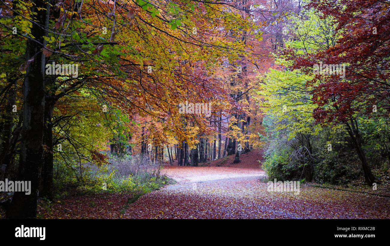 Beautiful Mountain Path In Autumn Through The Woods With