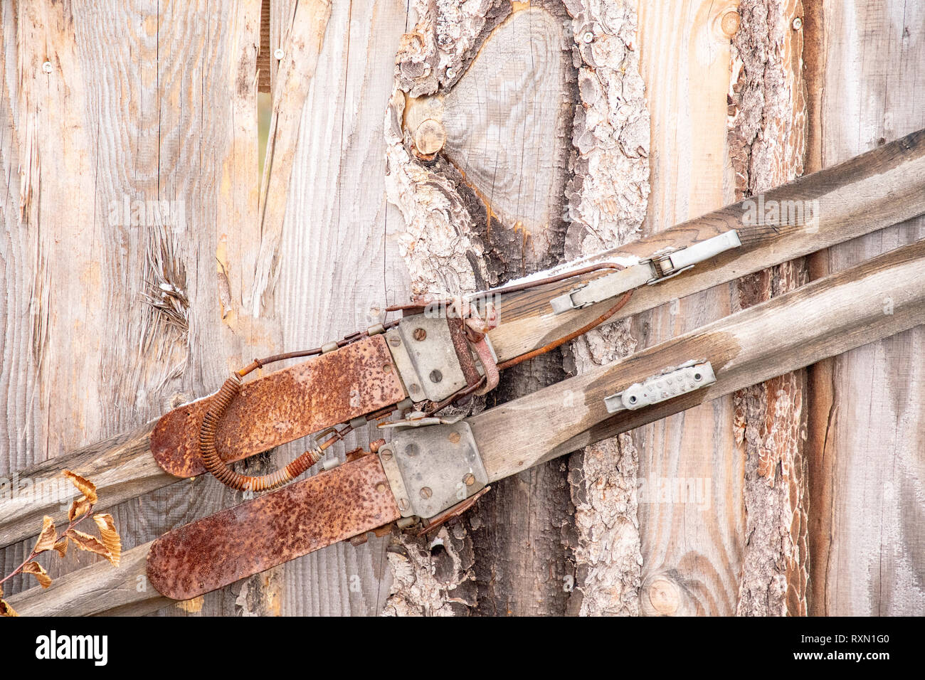 Old Rusty Wooden Cross Country Skis On A Wooden Wall Stock Photo