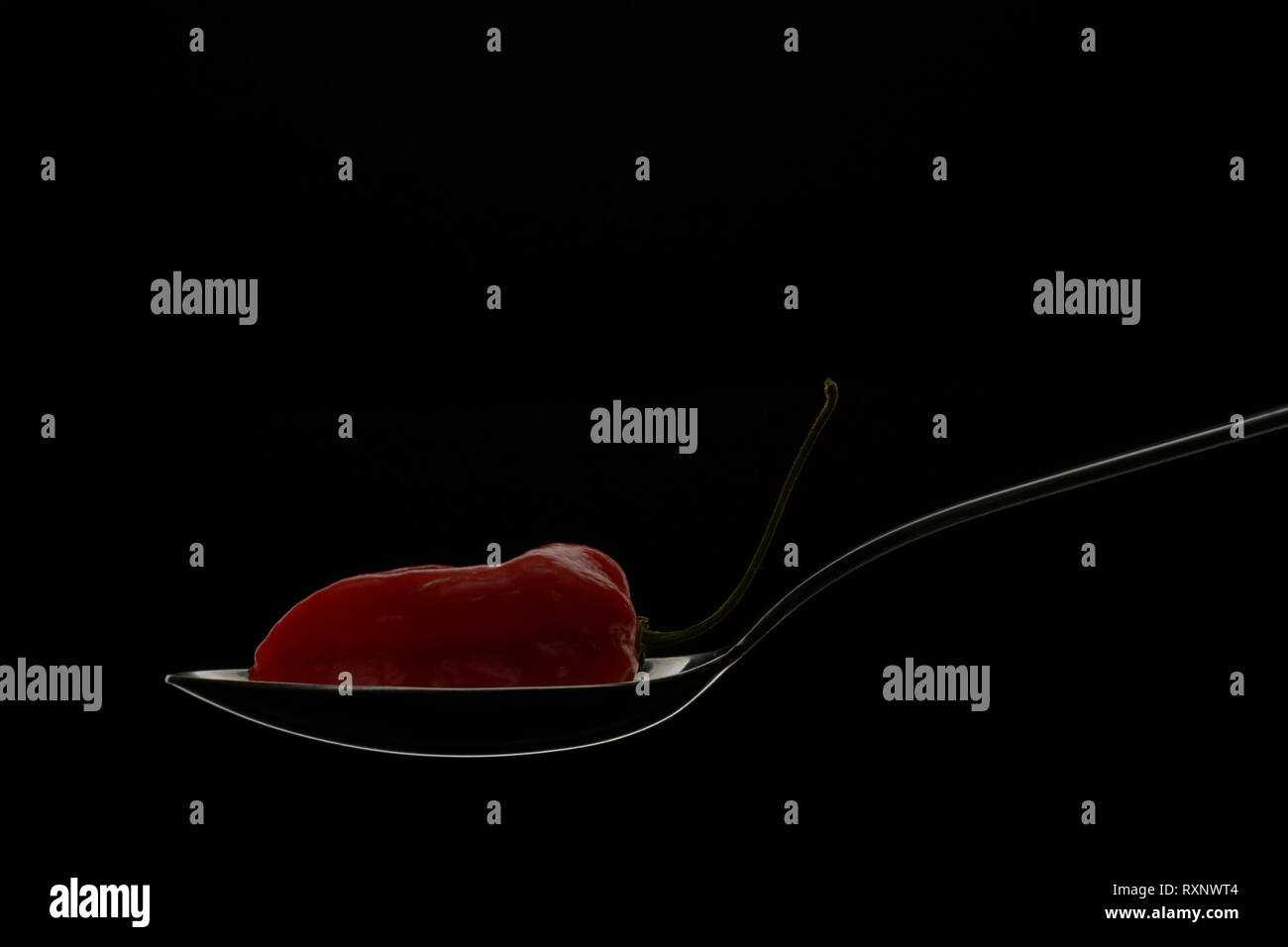 Isolated single Komodo dragon red hot pepper positioned on outlined in glowing light spoon on black background,modern food cooking concept. - Stock Image
