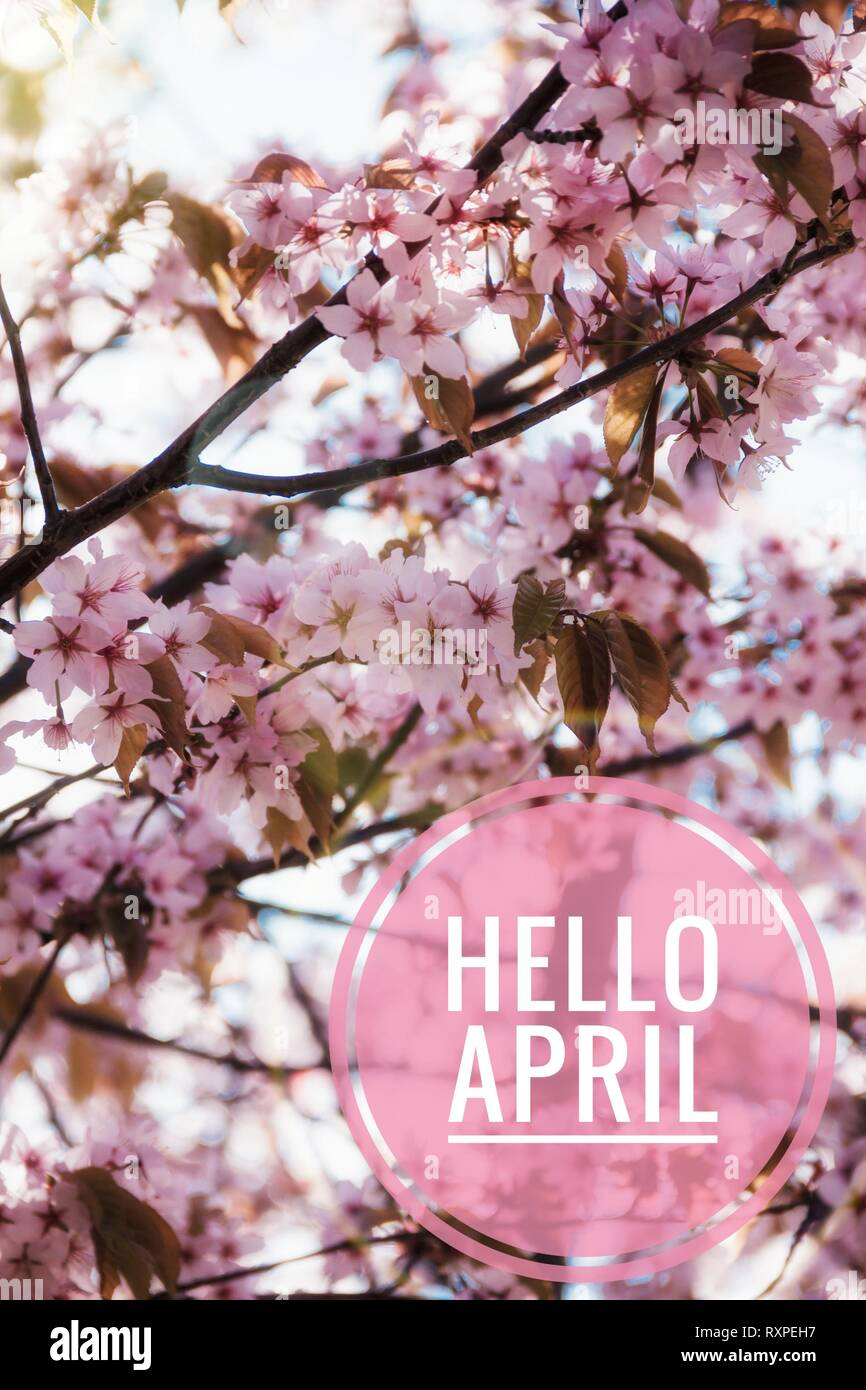 Banner Hello April Hi Spring Hello April Welcome Card We Are