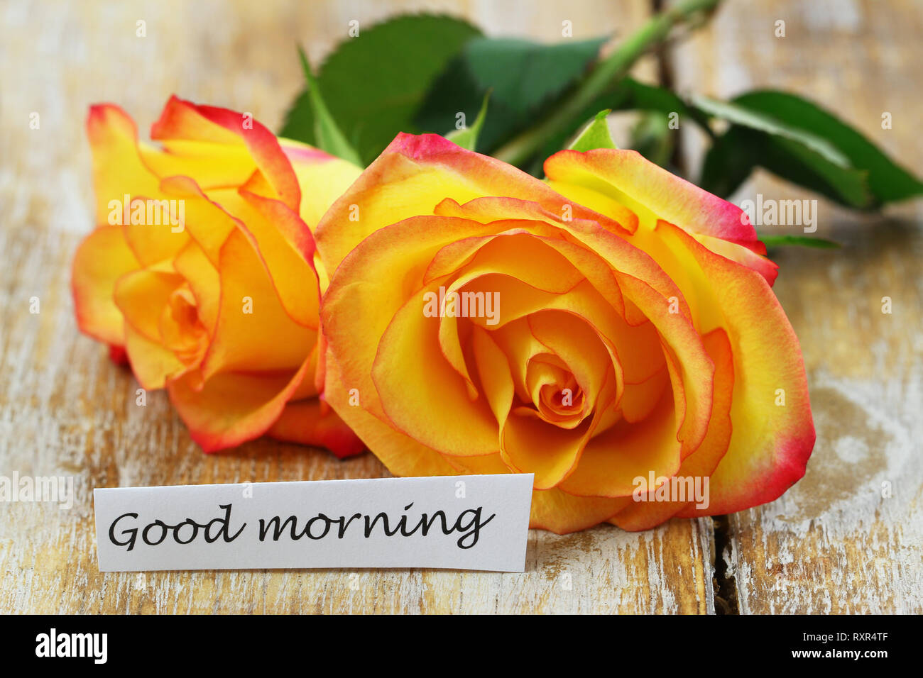 Good Morning Card With Flowers Stock Photos Good Morning Card With