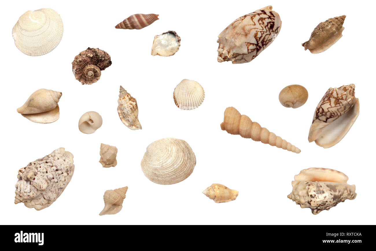 beautiful collection of different types of shells, isolated on white background Stock Photo