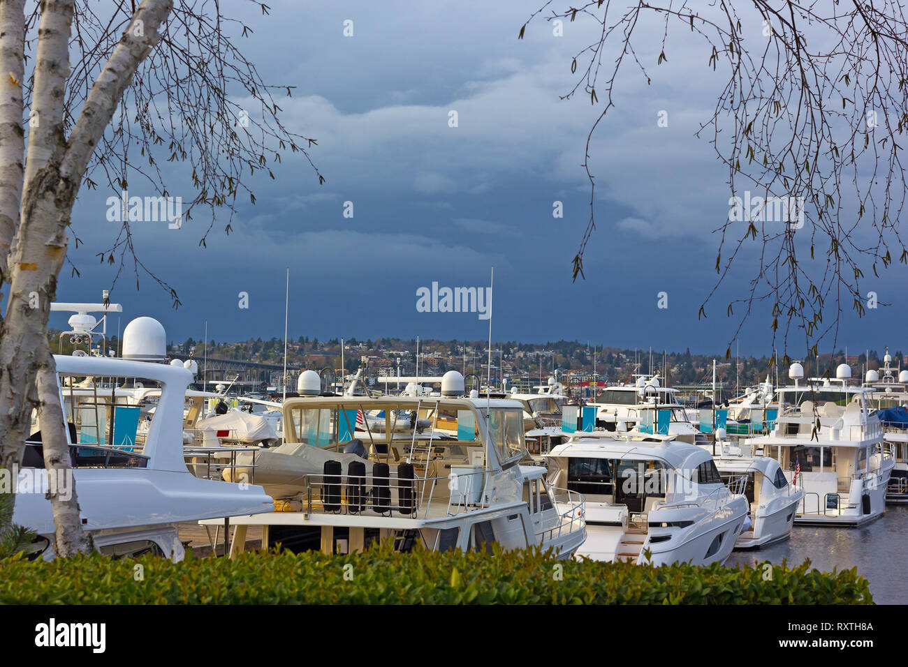 Luxury yachts moored at marina on Lake Union in Seattle.  Yachts that framed by leafless birch trees in spring. - Stock Image