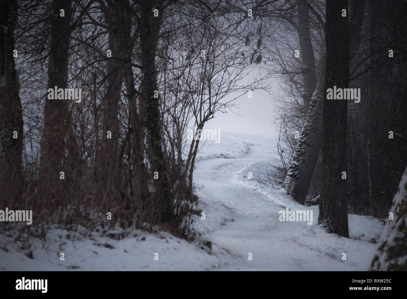 a beautiful forest path covered with snow, winter time in Austria, snowy landscape - Stock Image