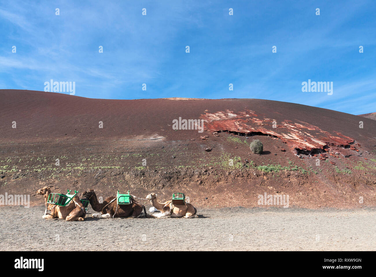 Departure station for the camel ride. Yaiza, Lanzarote. Spain Stock Photo